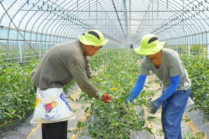 56,000-Foreign-Workers need in Korea